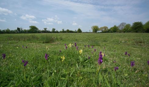 Winks Meadow - Suffolk Wildlife Trust