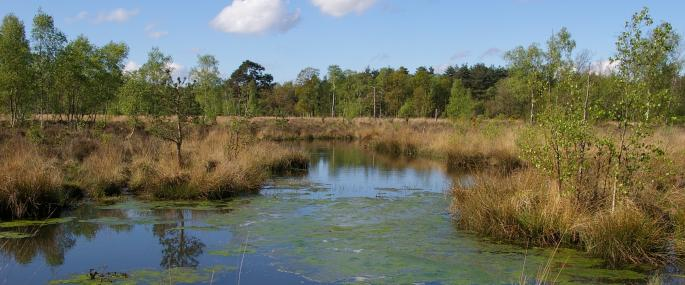 Wisley Common - © Mike Waite
