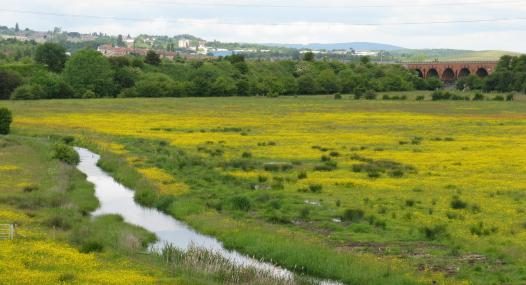 Woodhouse Washlands Nature Reserve - Nabil Abbas