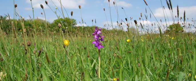 Clarke's Pool Meadow SSSI - Gloucestershire WT