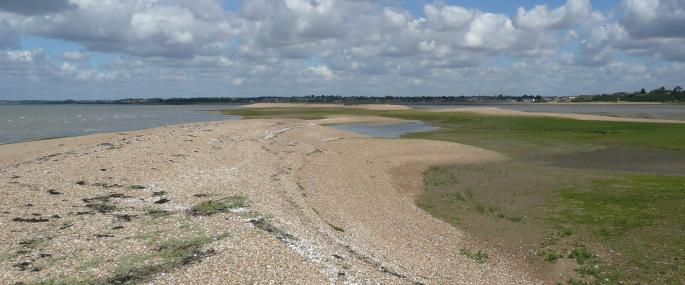 Colne Point Nature Reserve - Essex Wildlife Trust - Essex Wildlife Trust