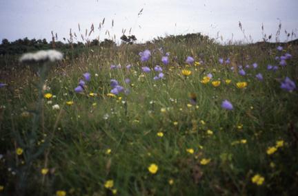 Dalby Mountain Moorland - Manx Wildlife Trust
