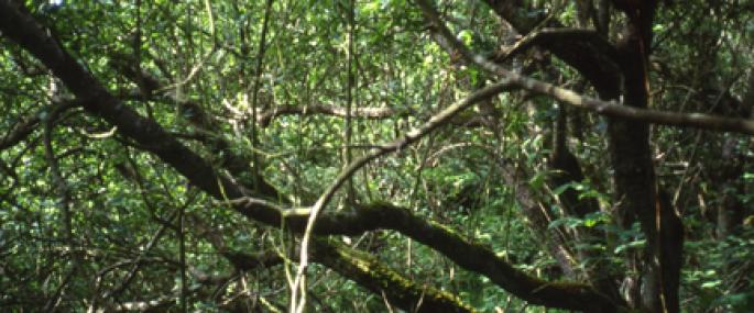 Earystane - Manx Wildlife Trust