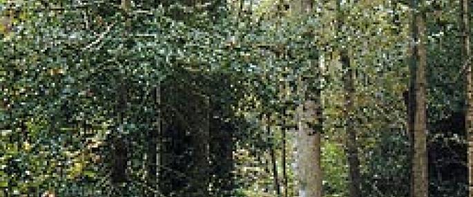Lion Wood - WKWT