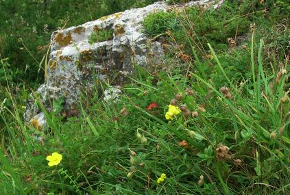 Rock face with rock rose - Avon Wildlife Trust