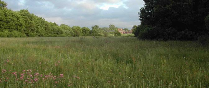 Allimore Green Common - Staffordshire Wildlife Trust