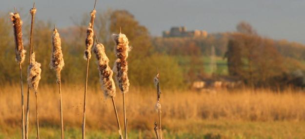 Tropical Island Beach Ambience Sound: Doxey Marshes Staffordshire Wildlife Trust