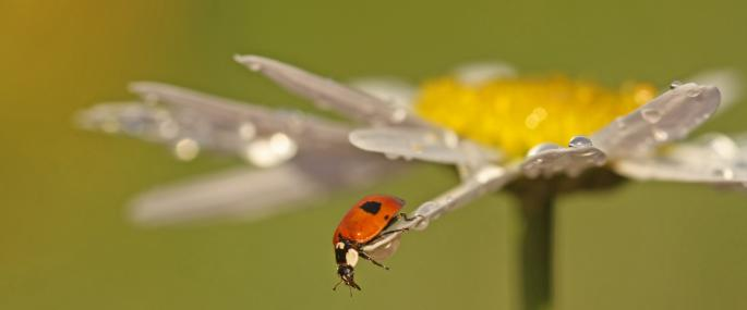 Two spot ladybird - Rachel Scopes - Rachel Scopes