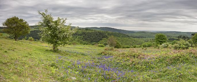 Devon Wildlife Trust Blackadon nature reserve - David Chamberlain