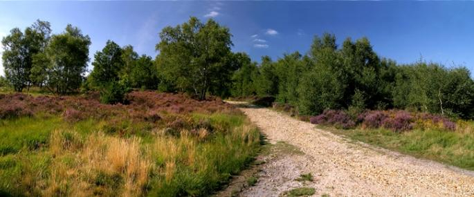 Chobham Common - © Stephen Duffy