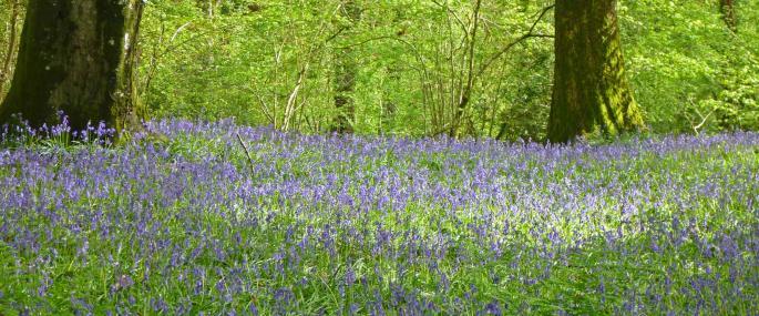 Coed Pendugwm Montgomeryshire Wildlife Trust Nature Reserve - © Tamasine Stretton