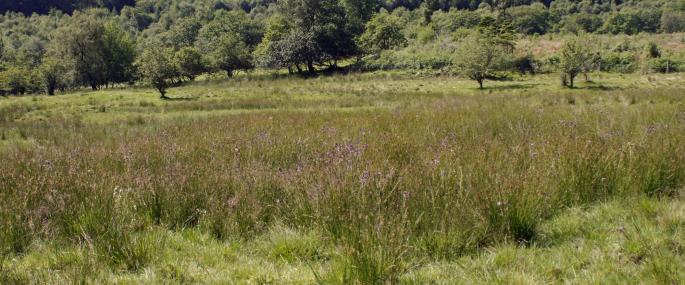 Dyfnant Meadows Montgomeryshire Wildlife Trust Nature Reserve - © MWT