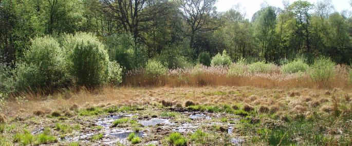 Farm Bog, Wimbledon Common - Credit Andrew Harding