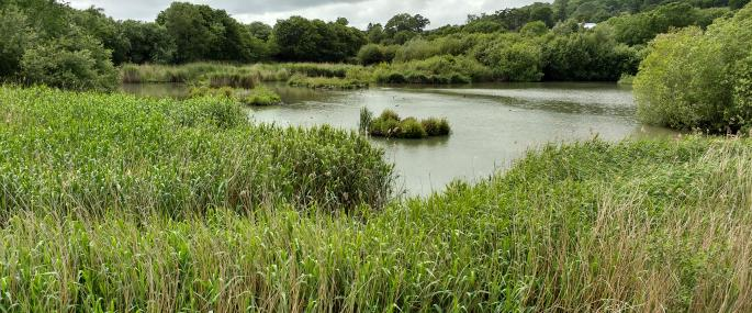 Pwll Penarth Nature Reserve Montgomeryshire Wildlife Trust - MWT
