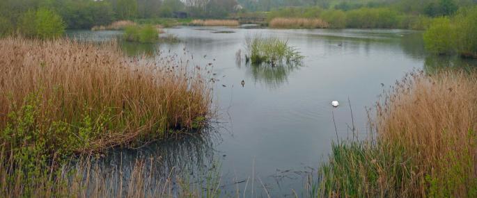 Pwll Penarth Montgomeryshire Wildlife Trust Nature Reserve - © MWT