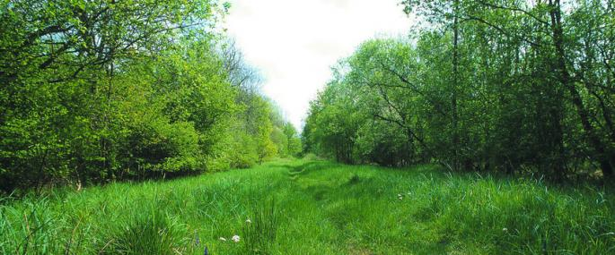Rushbeds Wood. Photo by Jim Asher -