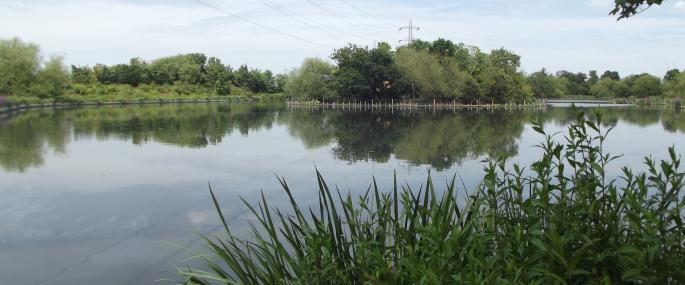 Walthamstow Wetlands - London Wildlife Trust
