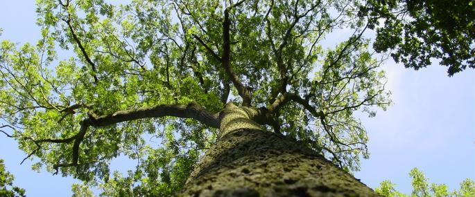 Ash tree - John Haddon