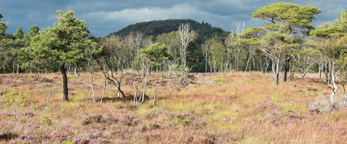 Meathop Moss Nature Reserve -