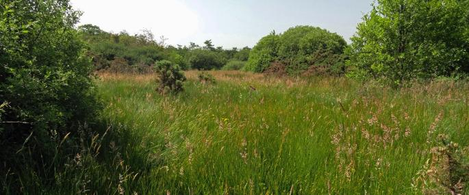 Scollag Marsh at Dobbies Meadow nature reserve - MWT