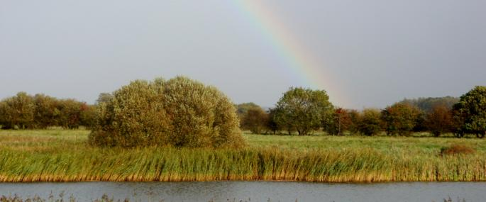 A rainbow under cloudy skies at Staveley Nature Reserve - Kat Woolley
