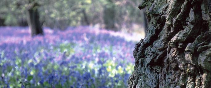 Brampton Wood - Clive Stephens