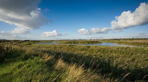 Trimley Marshes by Steve Aylward -