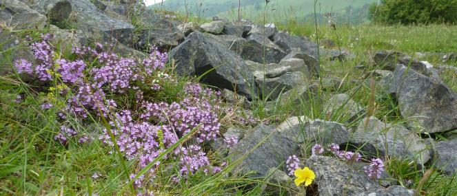 - Staffordshire Wildlife Trust