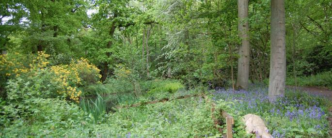 Woodland at Moorlands in spring - Kirsten Smith