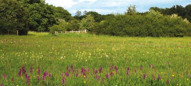 Bernwood Meadows by Peter Creed - Bernwood Meadows by Peter Creed