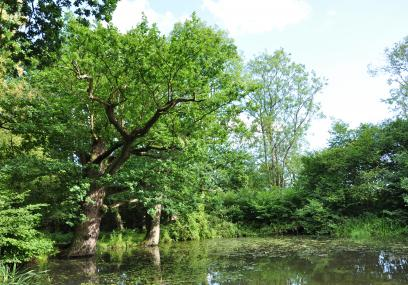 Pond at Ashford Warren and Hoads Wood - Beth Hukins