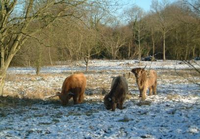 Broadham Down  - Kent Wildlife Trust