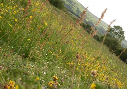 Limestone Grassland- Philip Precey - Philip Precey