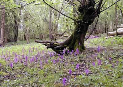Sideland - Radnorshire Wildlife Trust