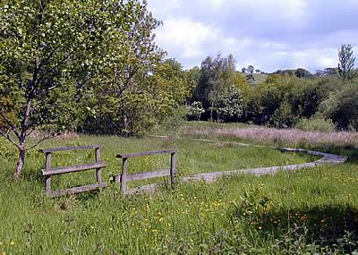 Werndryd Nature Reserve - Radnorshire Wildlife Trust