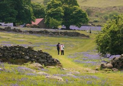 Open moorland and carpets of bluebell carpets make a walker's paradise - Simon Williams