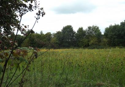 Woodside Farm -