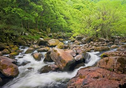 The River Dart flows through the nature reserve - David Chamberlain