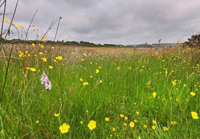 Devon Wildlife Trust Rackenford and Knowstone nature reserve - Dave Chamberlain