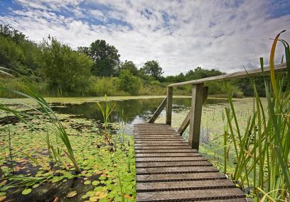 A boardwalk reaches out across the water of Little Bradley Ponds  - David Chamberlain