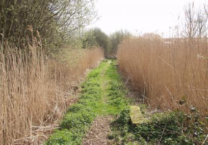 Path through Devon Wildlife Trust's Old Sludge Beds nature reserve  -