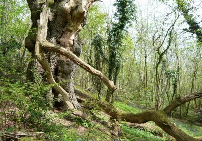 Cwm Byddog Nature Reserve -
