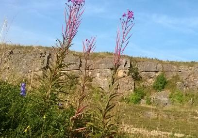 Hoe Grange Quarry nature reserve, Julia Gow.  Limestone, Good for butterflies - Julia Gow