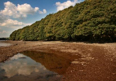 View across foreshore to woodland - Simon Williams