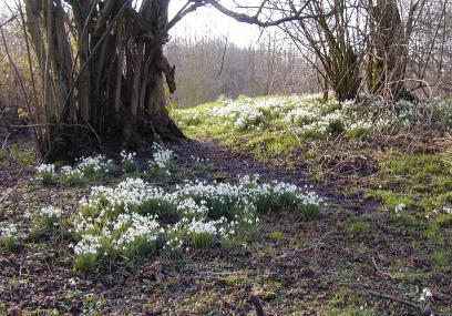 Burfa Bog Nature Reserve - Radnorshire Wildlife Trust