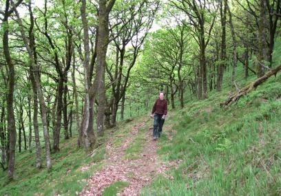 Cefn Cenarth Nature Reserve - Radnorshire Wildlife Trust