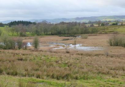 - Radnorshire Wildlife Trust