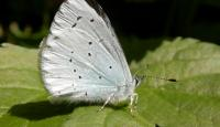 Photo of Holly Blue