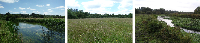 Frays Farm Meadows